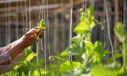 Ustroje linowe w architekturze i ogrodach