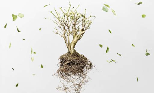 Jakie drzewa posadzić w ogrodzie? Poradnik