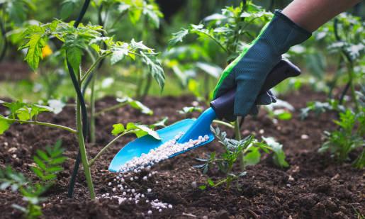 Zasady nawożenia roślin