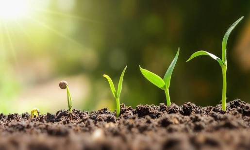 PH podłoża - jak je sprawdzić i jakie ma znaczenie w uprawie roślin?