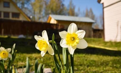 Które kwiaty są najłatwiejsze w uprawie?