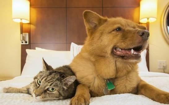 W jaki sposób działają hotele dla zwierząt?