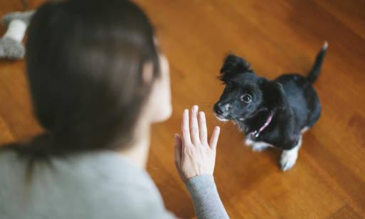 Jak nauczyć psa prostych sztuczek?