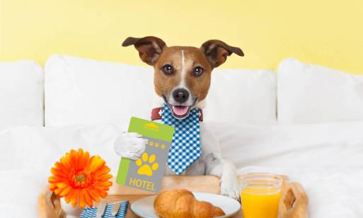 Jak dobrze wybrać psi hotel?