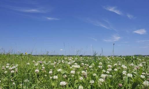 Co zaliczamy do pastewnych roślin bobowatych?