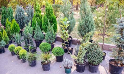 Czym zajmują się szkółki roślin ozdobnych?