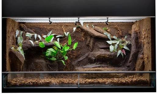 Jakie są różnice między akwarium a terrarium?