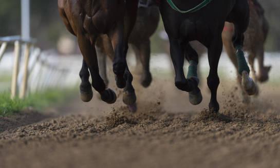 Nauka jazdy konnej dla laików – o czym należy pamiętać?