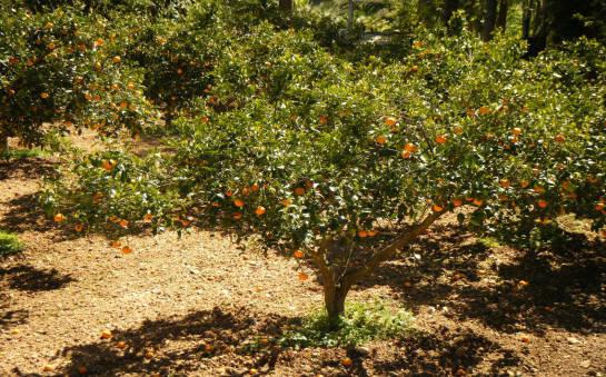 Masz działkę? Warto pomyśleć o posadzeniu drzewek owocowych