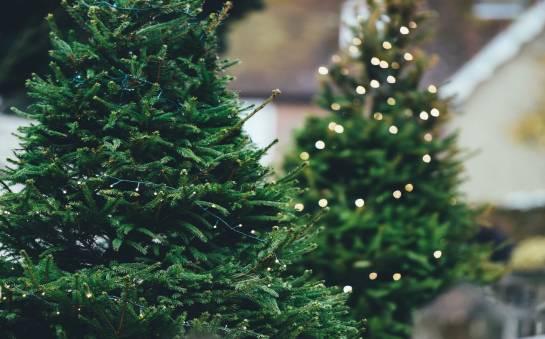 Sztuczna jak prawdziwa – w jaki sposób wykonuje się współczesne drzewka świąteczne?