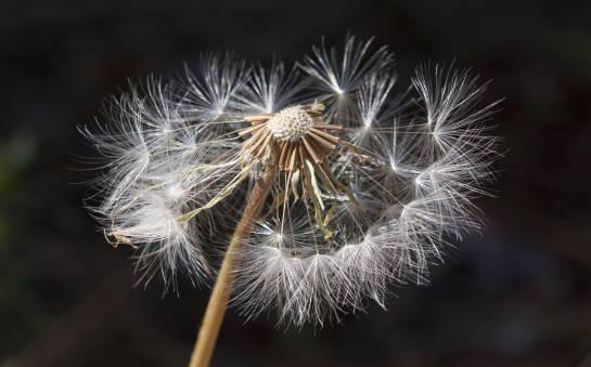 Pyłkowica – objawy i leczenie