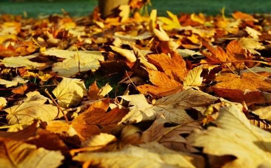 Przygotowanie do zimy – czyli o zmianach w przyrodzie jesienną porą