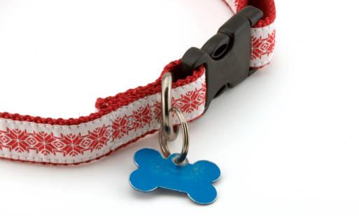 Jak wybrać adresówkę dla psa? Rodzaje i zalety