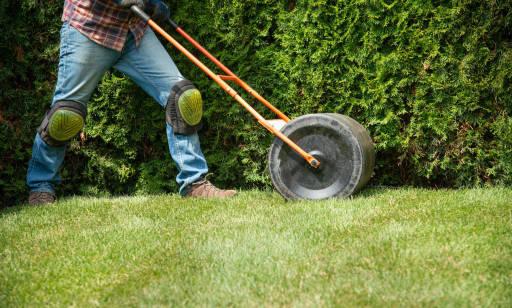 Kiedy i jak wałować trawnik?