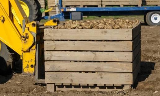 Cechy skrzyń do przechowywania ziemniaków