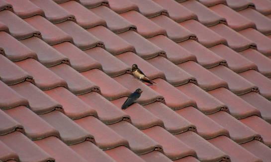 Wady i zalety dachówek betonowych