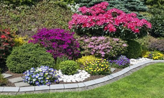 Drzewka ozdobne, czyli filigranowe piękno ogrodu