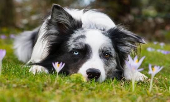 Dlaczego warto chipować psy?