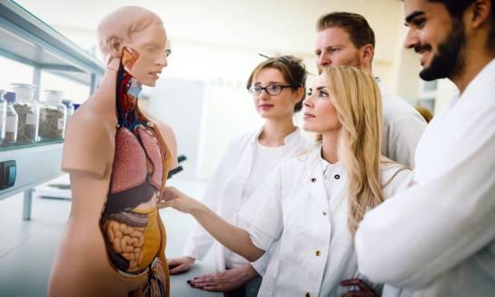 Modele anatomiczne dla studentów medycyny
