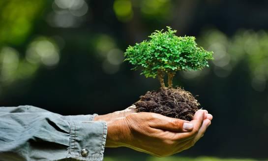 Drzewko jako nietypowy pomysł na prezent