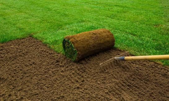 Trawnik z rolki kontra trawnik z siewu. Porównanie rozwiązań