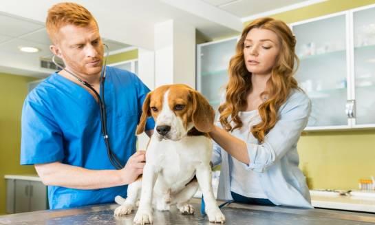 Jak zatrzymać biegunkę u psa? Porady i wskazówki