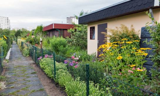 Wąska działka. Projekt ogrodu – na co zwrócić uwagę?