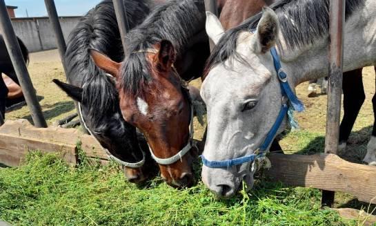 Paśniki dla bydła i koni. Jakie powinny być?