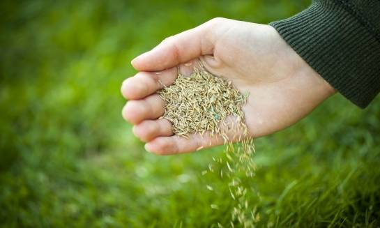 Siew trawy w ogródku. Podstawowe zasady