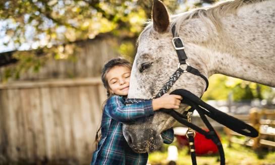 Czym charakteryzuje się pensjonat dla koni?