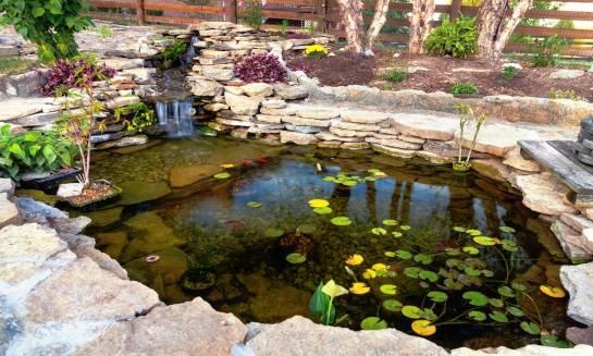 Zakładanie oczka wodnego w ogrodzie