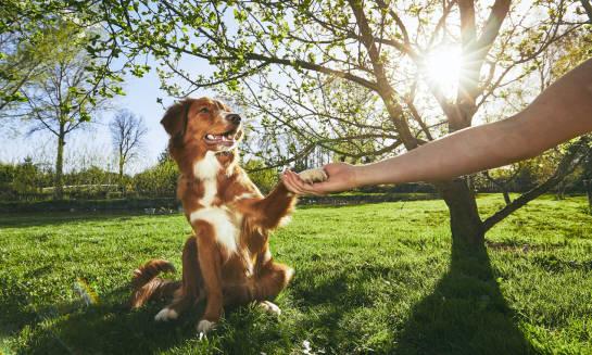 Pies dobrze wychowany, czyli jak wytresować czworonoga?