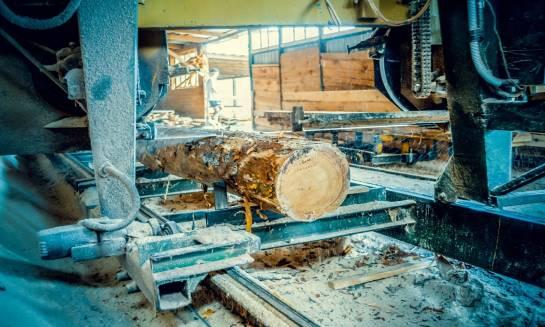 Skąd bierze się drewno w tartaku?