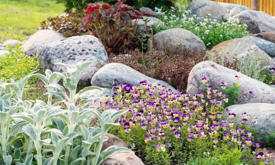 Jak założyć ogród skalny?