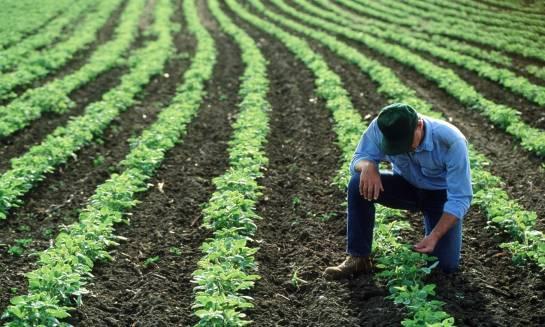 Główne odmiany soi