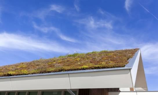 Dobór roślin na zielony dach