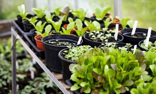 Jakie rośliny nadają się do uprawy szklarniowej?