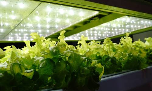 Technologia LED jako dobry sposób na oświetlenie szklarni