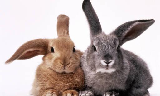 Jak wybrać klatkę dla królika? Opis, żywienie i wychowanie