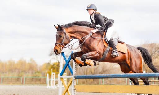 Nauka jazdy konnej – jak zacząć?