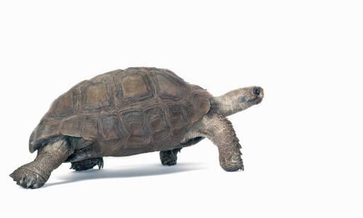 Co jedzą żółwie? Podstawowy i dodatkowy pokarm oraz rodzaje