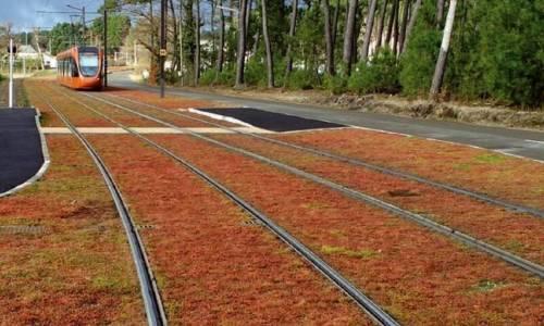 Zielone torowiska jako narzędzie obrony miast przed zmianami klimatycznym