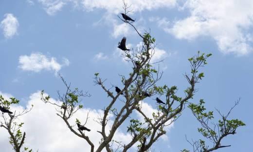 Zastosowanie dźwięków przy odstraszaniu ptaków