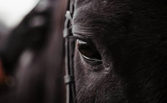 Ubój polskich koni. Temat trudny, ale konieczny do przedyskutowania