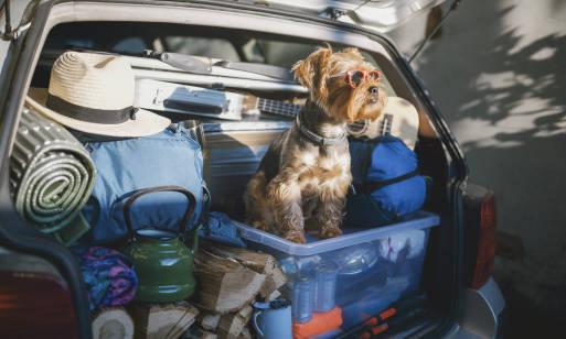 Gdzie wyjechać na wakacje z psem? Wskazówki