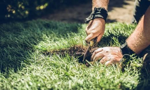 Jakich narzędzi trzeba do układania trawy z rolki?