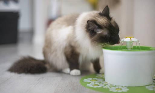 Jak ochłodzić kota w lecie? Wskazówki!