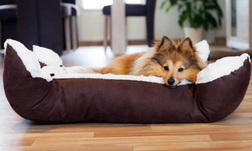 Jak przygotować wygodne legowisko dla psa?