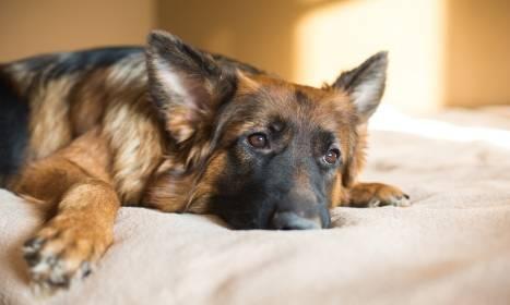 Jak działają hotele dla psów?