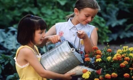 Popularne odmiany aksamitek w Polsce
